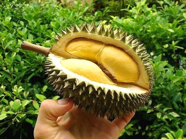 12 lý do chính đáng mà bạn nên ăn sầu riêng