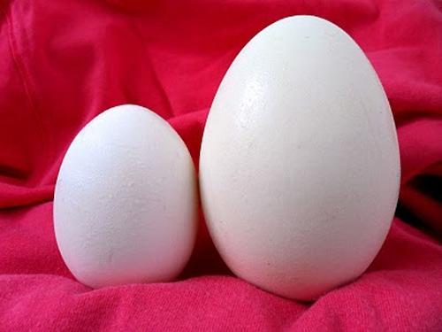 Ăn trứng ngỗng sinh con thần đồng?