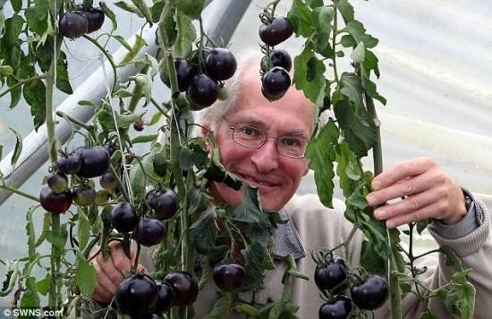 Cà chua đen có khả năng ngăn ngừa ung thư