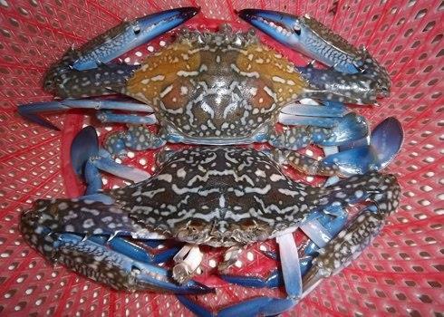 Cách chọn mua hải sản tưới sống