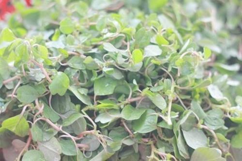 Canh rau dền nấu ngao hoa