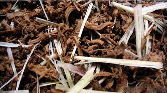 Chế biến nấm khô ngon như thịt bò khô