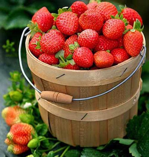 Thực phẩm tối ưu chống nắng